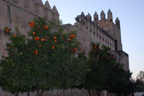De fausses oranges !