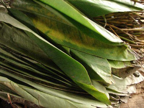 Les feuilles d'emballage du poisson (avant cuisson)