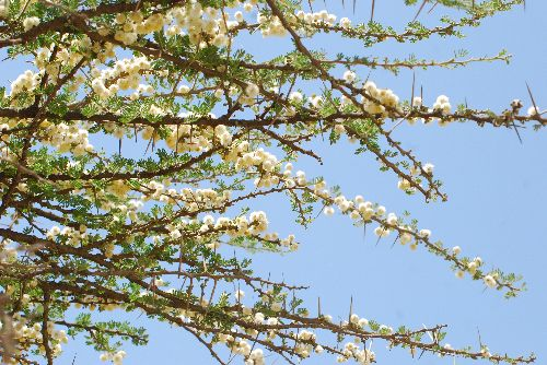 Epineux en fleurs - mai 2009