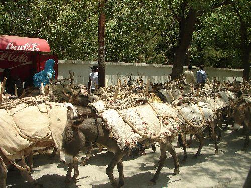 Passage des ânes-Dire Dawa-Sept 09