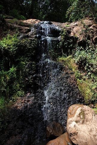Petite cascade dans le parc