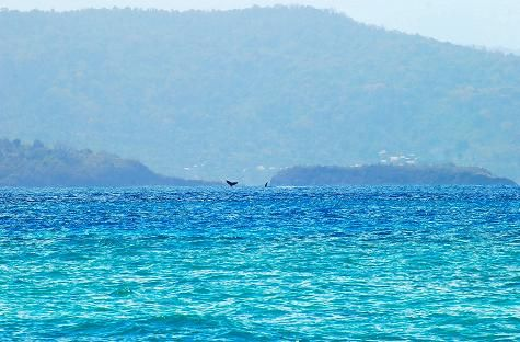 Des baleines, au loin !