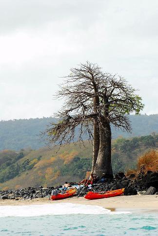 Baobab îlot Bambo