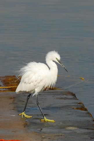 Oiseau - Lac Awasa - Octobre 2010