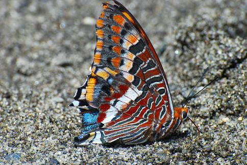 Papillon - Langano - Octobre 2010