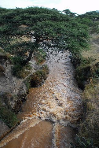 Route de Langano - Octobre 2010