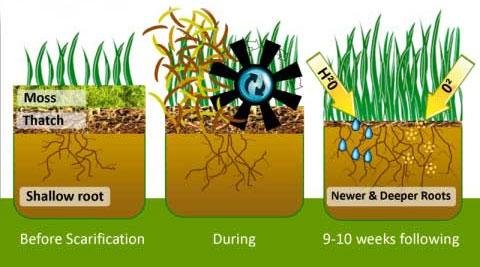 lawn-scarifying-process.jpg