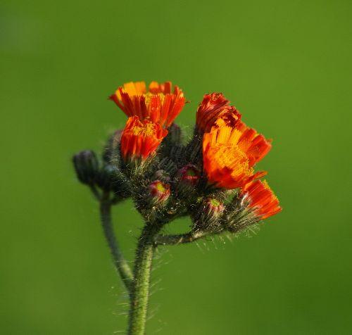 Fleur du jardin (le nom m\'est inconnu). Si quelqu\'un pouvait m\'aider