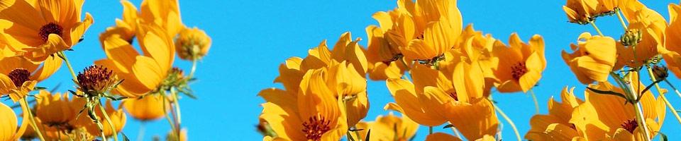 Festival fleurs et  pinceaux à St Sylvain d\'Anjou
