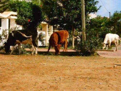 Kénitra : Commune Urbaine ou ... Commune Rurale  . 4