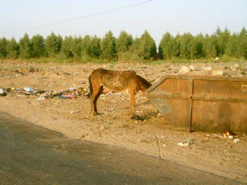 Kénitra : Commune Urbaine ou ... Commune Rurale !!!  . 11