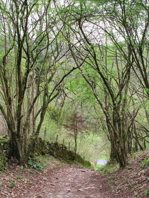 Cheddar, Somerset