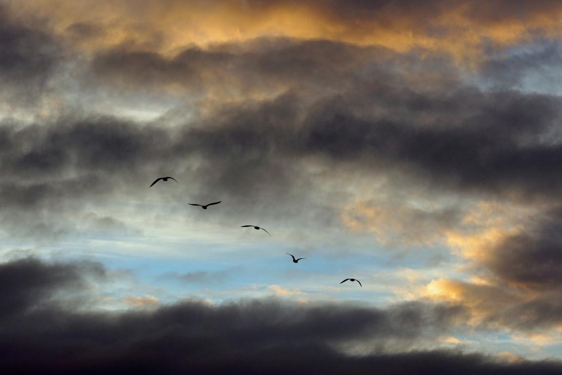 A ciel ouvert 35 (Medium).jpg