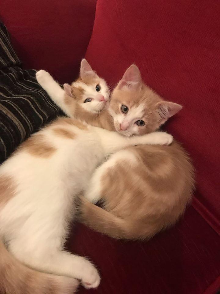 Iris et Tigrou