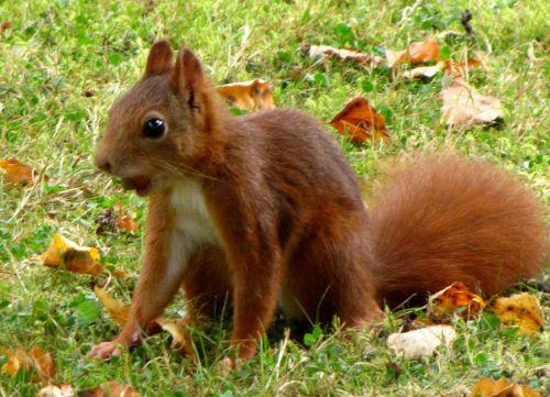 Mignon petit écureuil chez mon frère