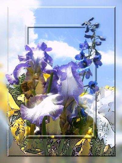 Iris recadrés