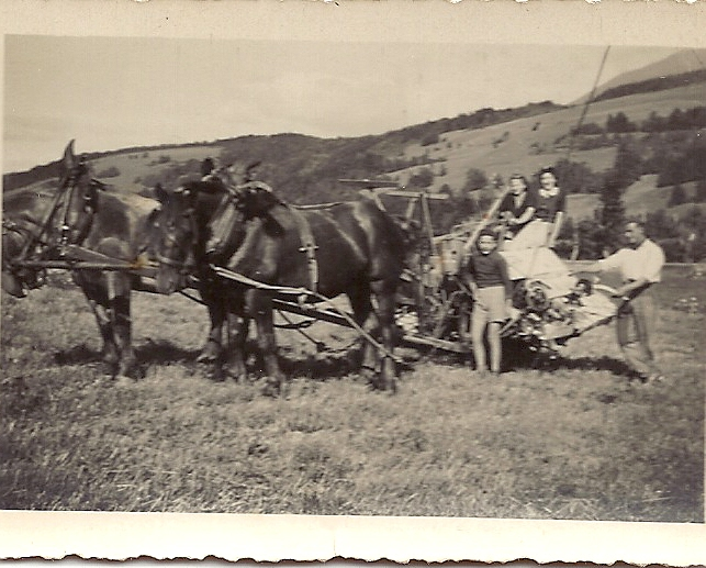 Moisson avec la lieuse à cheval au Muret2-1941-Simone Fruhauf.jpg