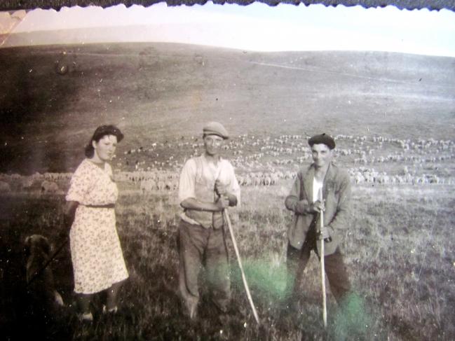 Transhumance sur Connexe des moutons du Baron de Sambucy de Sorgues (région d'Arles) avec le berger Joseph Gaspard vers 1940 (3)_R.jpg