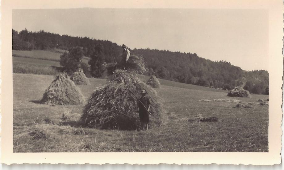 travail aux champs-maison à la Roche-Louis et Marie Melmoux-1947 ou 48.jpg