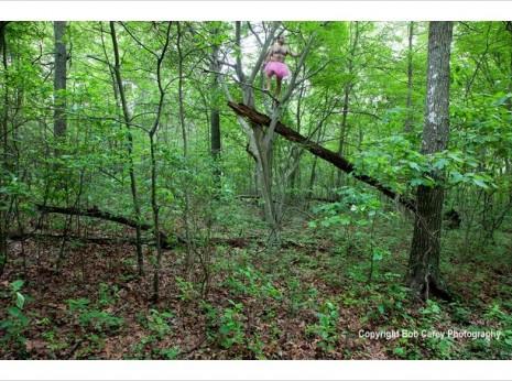 Fallen-Tree-Bob-Carey-Photography-465x346.jpg