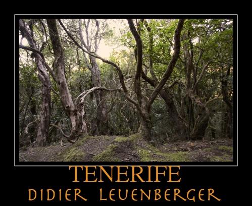TENERIFE D5 DECEMBRE 2013 1320 - Version 2.jpg