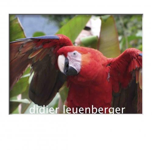 COSTA RICA HIVER 2011-2012 1210.jpg