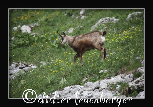 SUISSE MORTEYS D5 SELECT 13 JUIN 2014 105.jpg