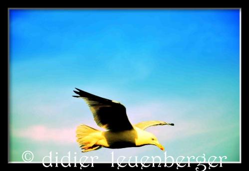 ANGLETERRE SUD N7100 AOÛT 2014 689ggf.jpg