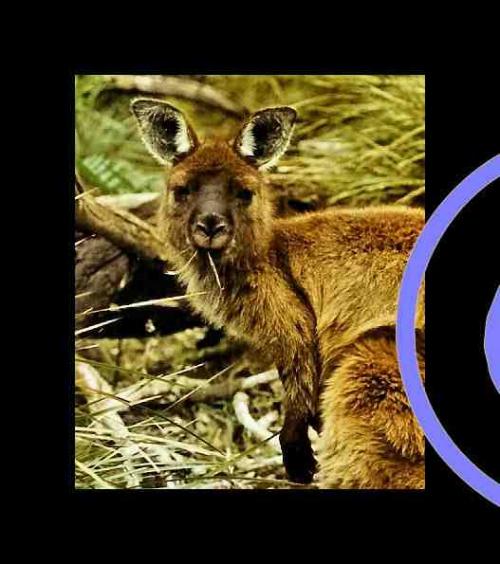 AUSTRALIEr0226VV.jpg
