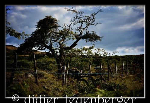 ANGLETERRE SUD N7100 AOÛT 2014 2154 - Version 3.jpg