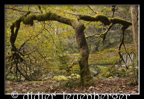 SUISSE AREUSE & VAN N 7100 03 OCTOBRE 2014 95 - Version 5.jpg