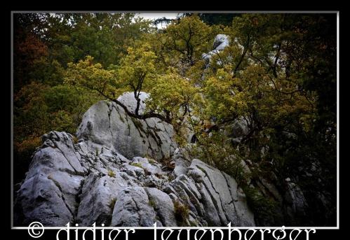 SUISSE AREUSE & VAN N 7100 03 OCTOBRE 2014 256 - Version 2.jpg