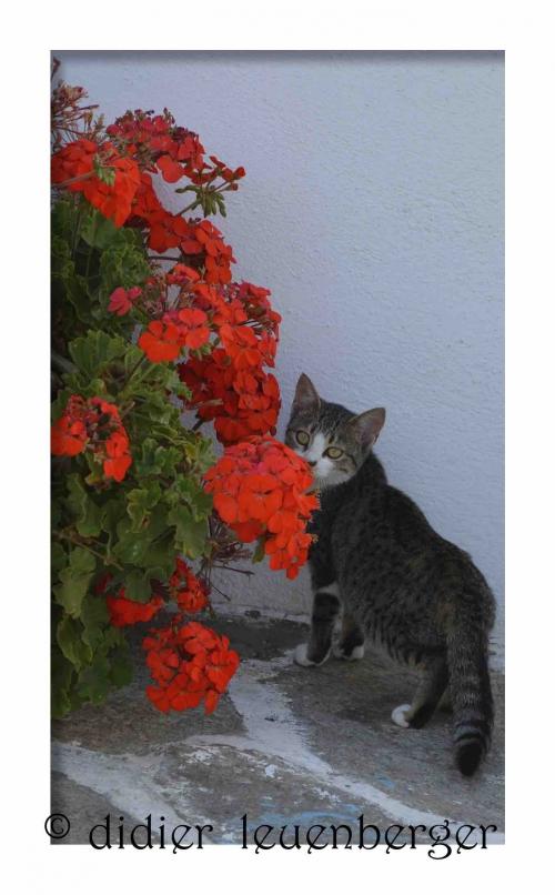 GRECE PAROS N7100 21 OCTOBRE 2014  554 - Version 2.jpg
