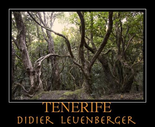 TENERIFE D5 DECEMBRE 2013 1319 - Version 3.jpg