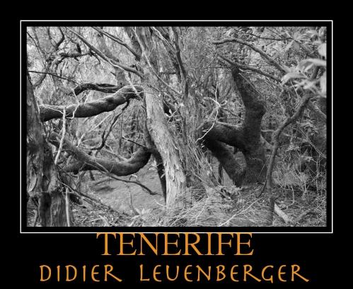 TENERIFE D5 DECEMBRE 2013 1332.jpg
