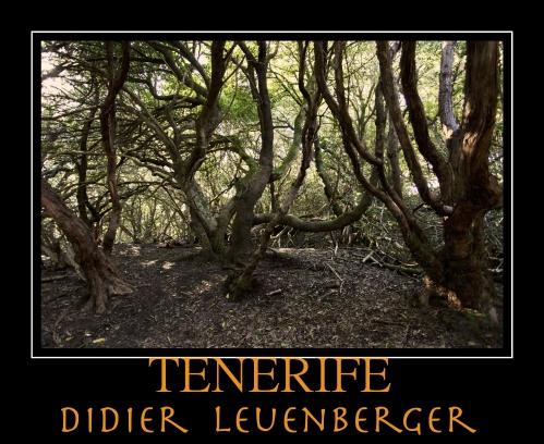 TENERIFE D5 DECEMBRE 2013 1209 - Version 3.jpg