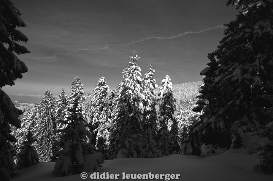didier leuenberger -427.jpg