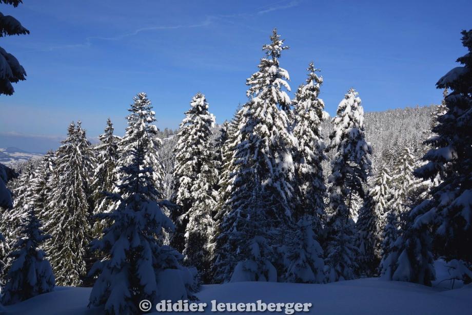 didier leuenberger -35.jpg