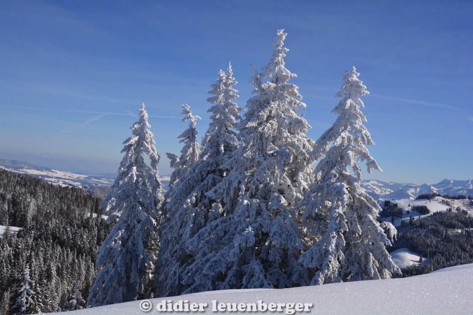 didier leuenberger -73.jpg