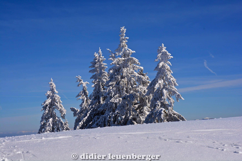 didier leuenberger -310.jpg