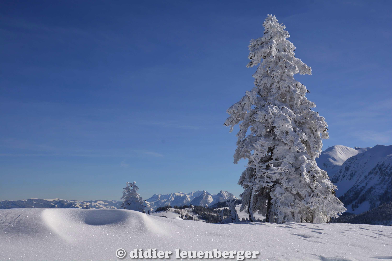 didier leuenberger -143.jpg