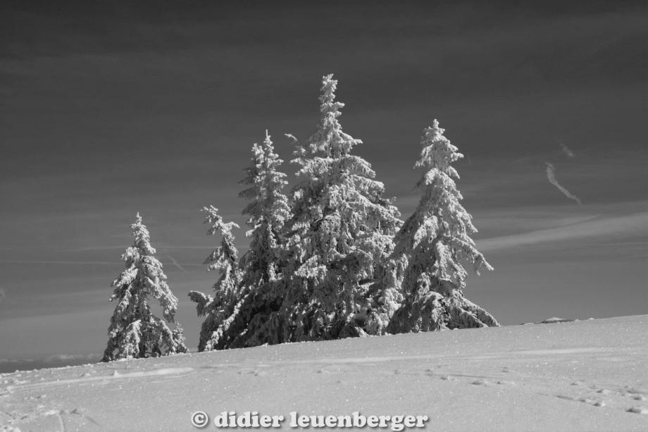 didier leuenberger -312.jpg