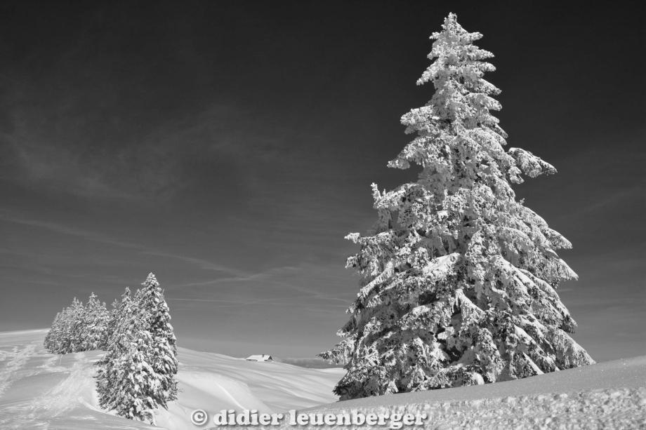didier leuenberger -411.jpg