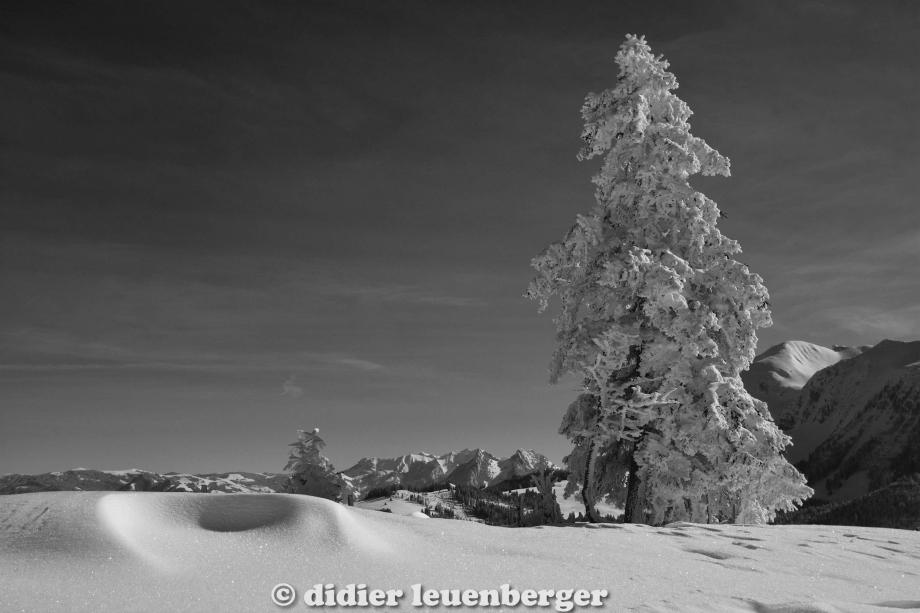 didier leuenberger -387.jpg