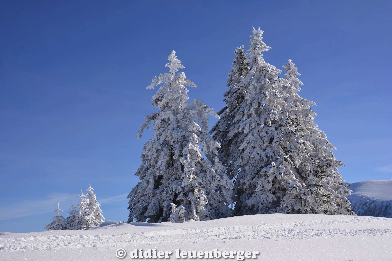 didier leuenberger -268.jpg