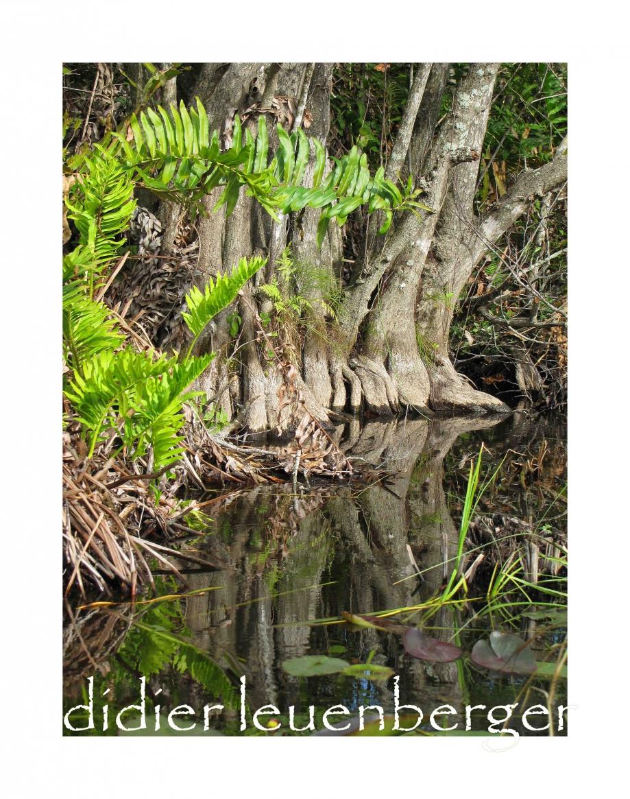 USA FLORIDE DECEMBRE 2010 1714.jpg