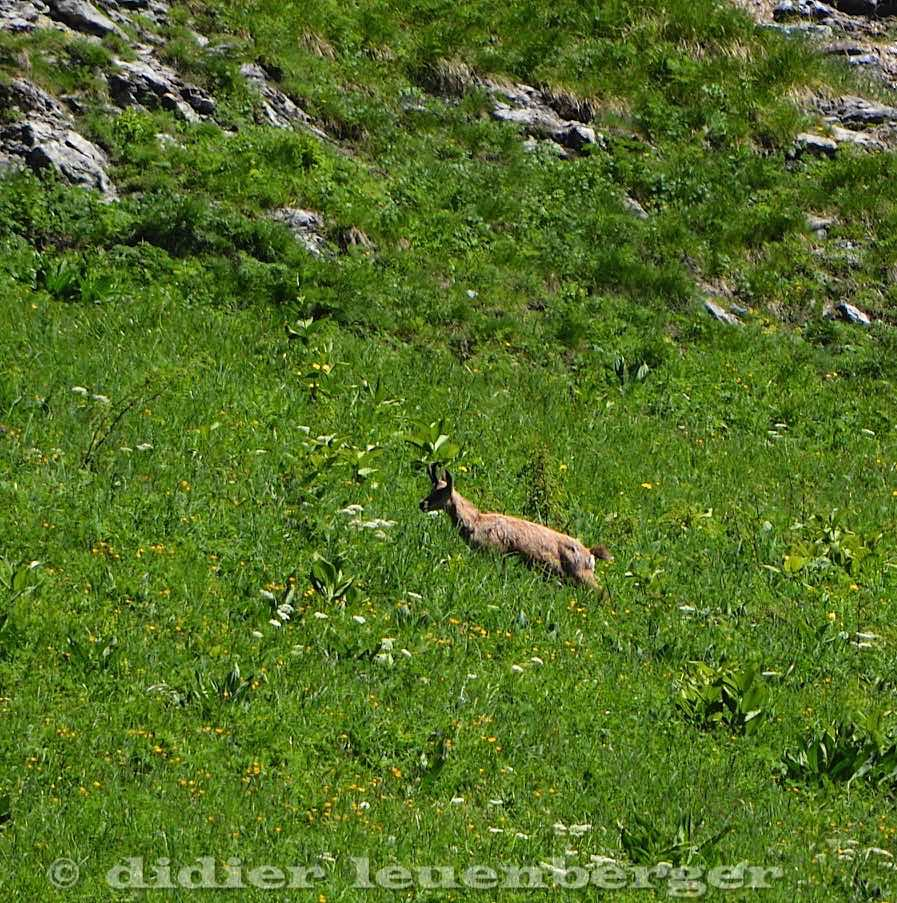 SUISSE MORTEYS N7100 SELECT 23 JUIN 2016-164.jpg