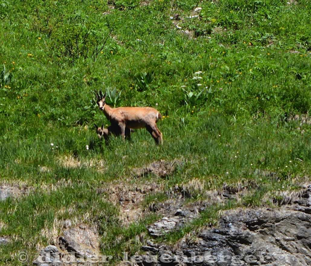 SUISSE MORTEYS N7100 SELECT 23 JUIN 2016-152.jpg