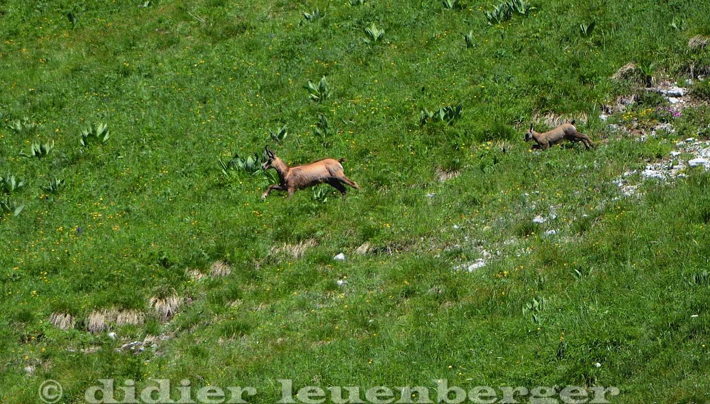 SUISSE MORTEYS N7100 SELECT 23 JUIN 2016-158.jpg