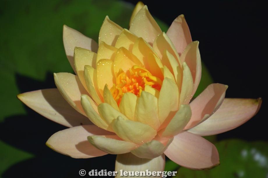 didier leuenberger -27.jpg